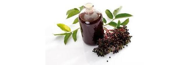 Effects of Elderberry during Flu Season
