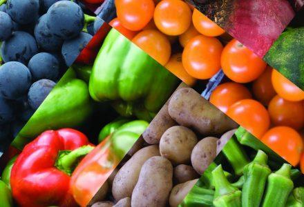 Lifestyle Practice Six – Plant Based Diet