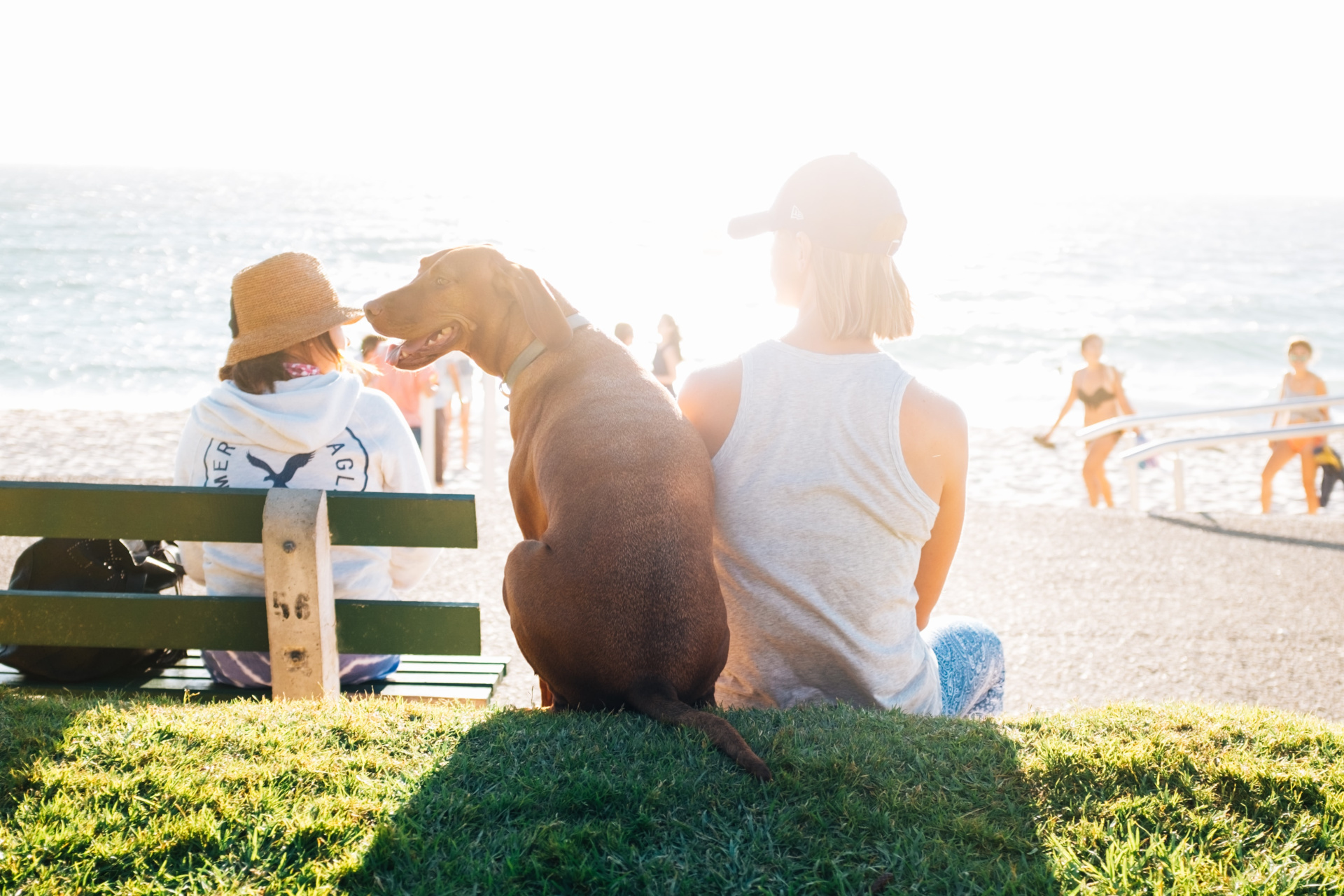 Person And Dog Sitting On A Grass Bank While Looking Over The Ocean On A Sunny Day