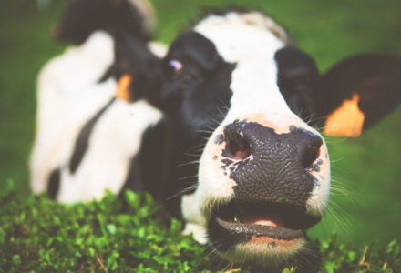 Why Dairy Is Bad For Your Health